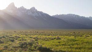 Yellowstone, Grand Teton parks rescues near 90