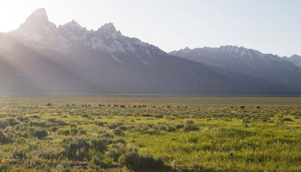 Yellowstone, Grand Teton parks rescues near 90 this year