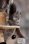 Family learns native squirrels can be surprisingly smart