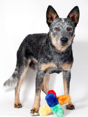 Pet of the week: Blu