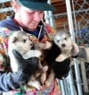 Owen Morgan carries two rescued malamutes