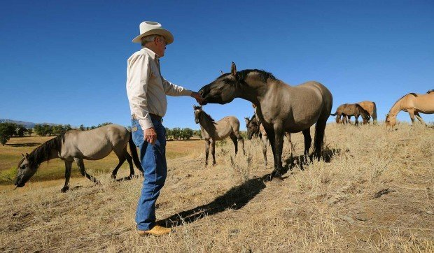 Advocates Hope To Keep Older Horses From Pryor Mountains