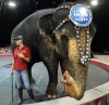 City Lights: No dog's life: Circus animals give their side of story