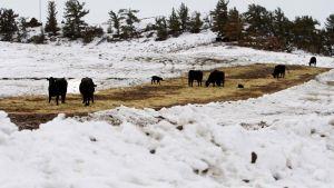 Livestock board cuts jobs, approves furloughs