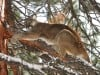 Wyoming study finds cougars avoid wolf territory
