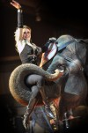 Head downtown for an elephant ride tonight