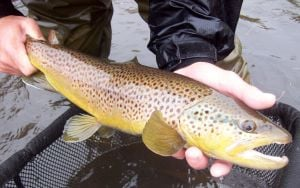Game department stocks trout in Cheyenne lakes