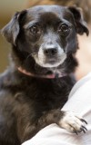 Blackie is pet of the week at Help for Homeless Pets.
