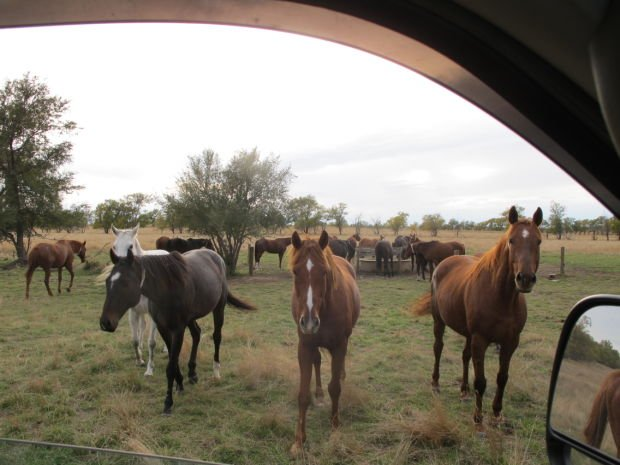 retired racehorses looking for new homes