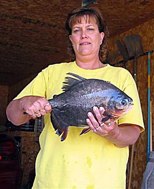 39 weird 39 fish caught in north dakota lake is piranha cousin for North dakota fishing