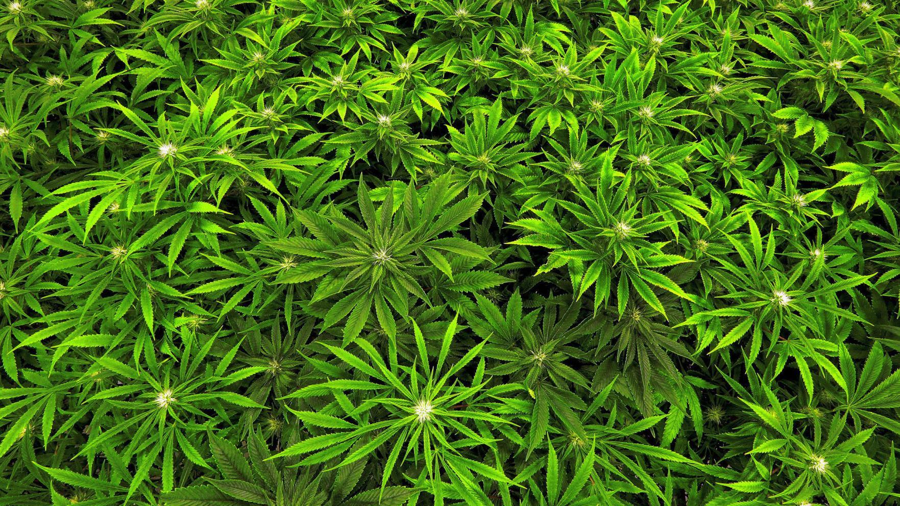 Health insurers won't cover medical marijuana in North Dakota