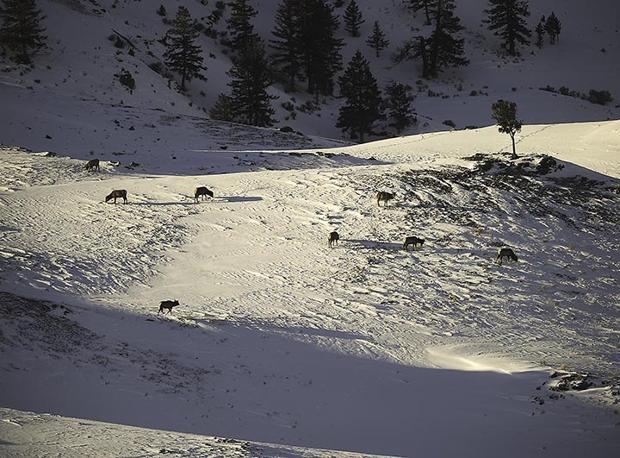 Yellowstone Park report