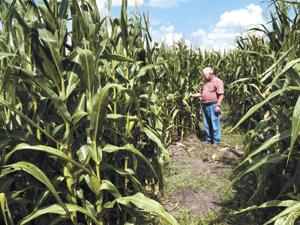 Maize craze hits Brenham