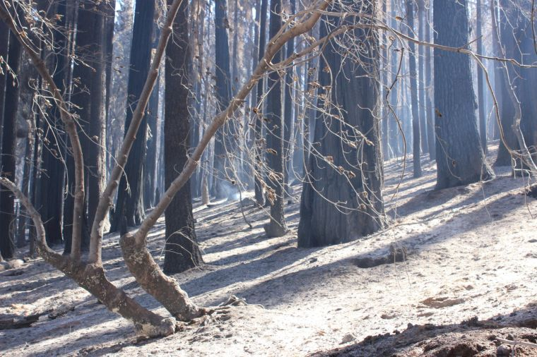 Firefighters home safe after Rim Fire battle