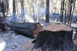 Loggers weigh in on Rim Fire logging