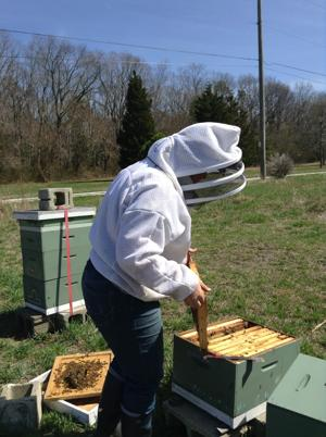 Bee beginners buzz cape may county herald community - Beekeeping beginners small business ...