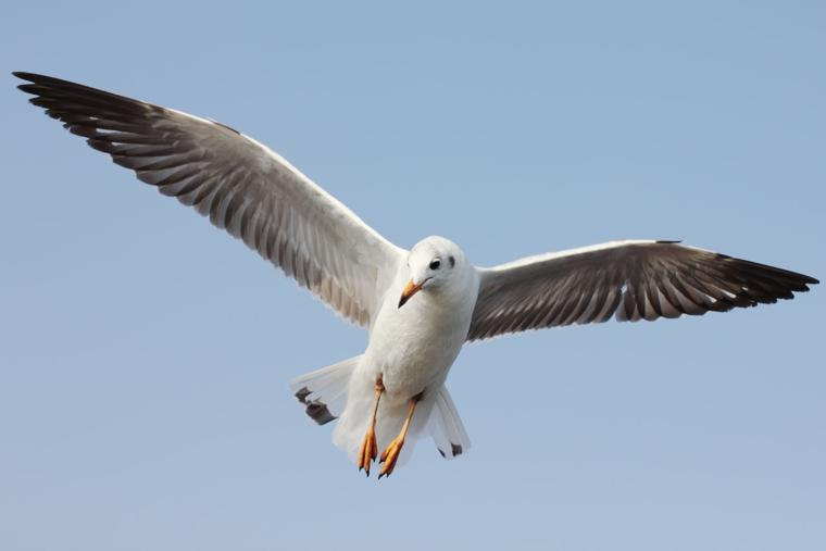 Gull S Death May Bring Fine Cape May County Herald News