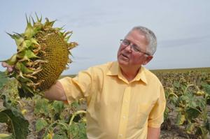 Sky's the limit for oilseeds