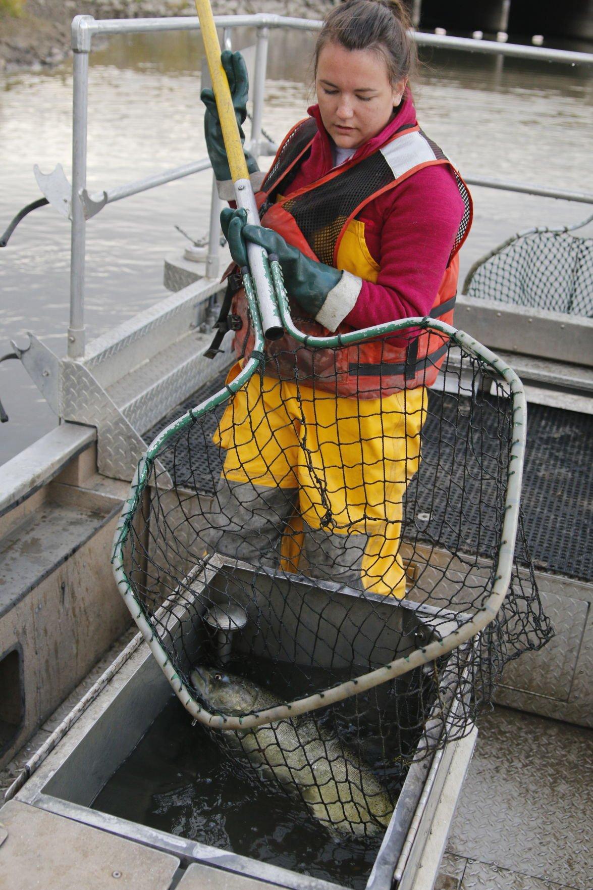 Lake Oahe Salmon Fishery Still Rebuilding After Flood