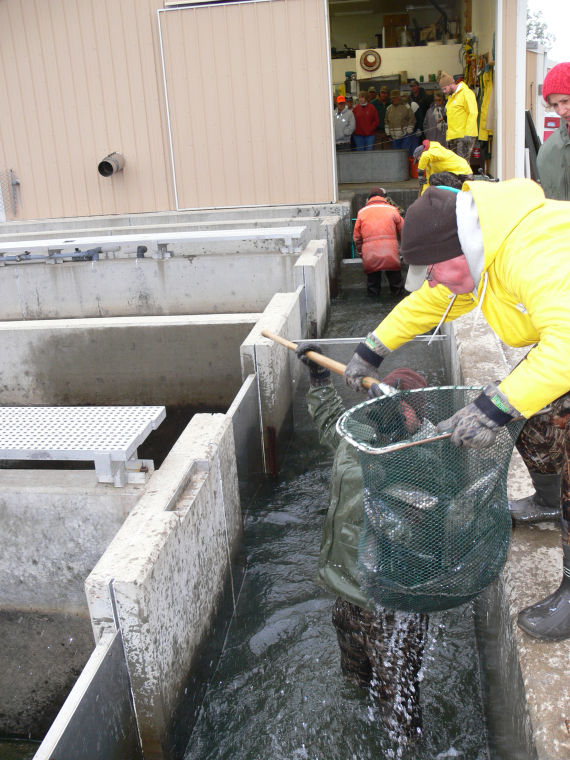 New fish species considered for oahe local news stories for South dakota game fish