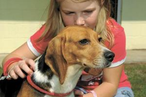 Rescued beagles from research lab recover
