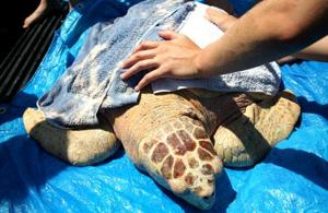 Net Concerns: Federal lawsuit filed by Karen Beasley Sea Turtle Rescue and Rehabilitation Center
