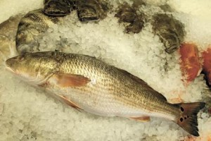 Red drum: to serve or not to serve on menu