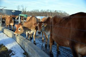 Md. bill would OK raw milk sales