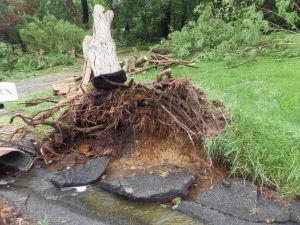Fair Hill storm damage