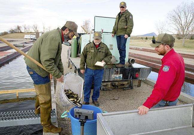 Fish Hatchery Works To Raise Spring Trout Count Local