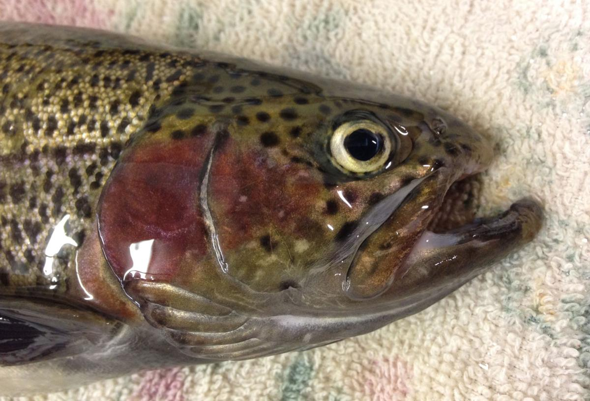 Keyes rainbow trout make for fun fishing recreation for Nebraska game fish and parks