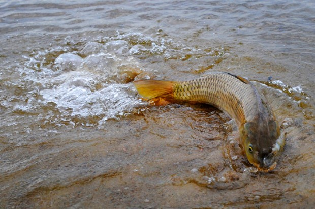 Fishing on the platte river for Wright motors north platte