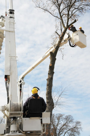 <p>Waverly has begun removing ash trees that are infested by the emerald ash borer.</p>