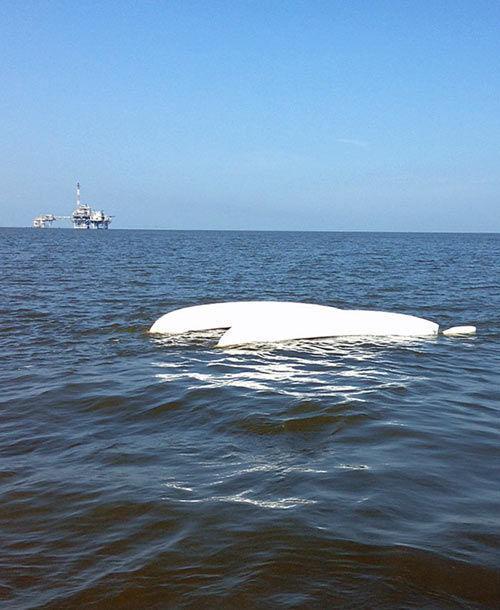 Rapid response saved lives at dauphin island race for Deep sea fishing mobile al