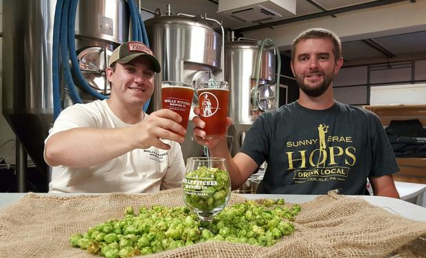 Carlisle brewery and hop yard coming together