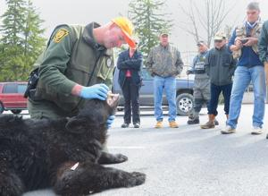 Wounded warriors get to fish see bear up close and for Spring warrior fish camp