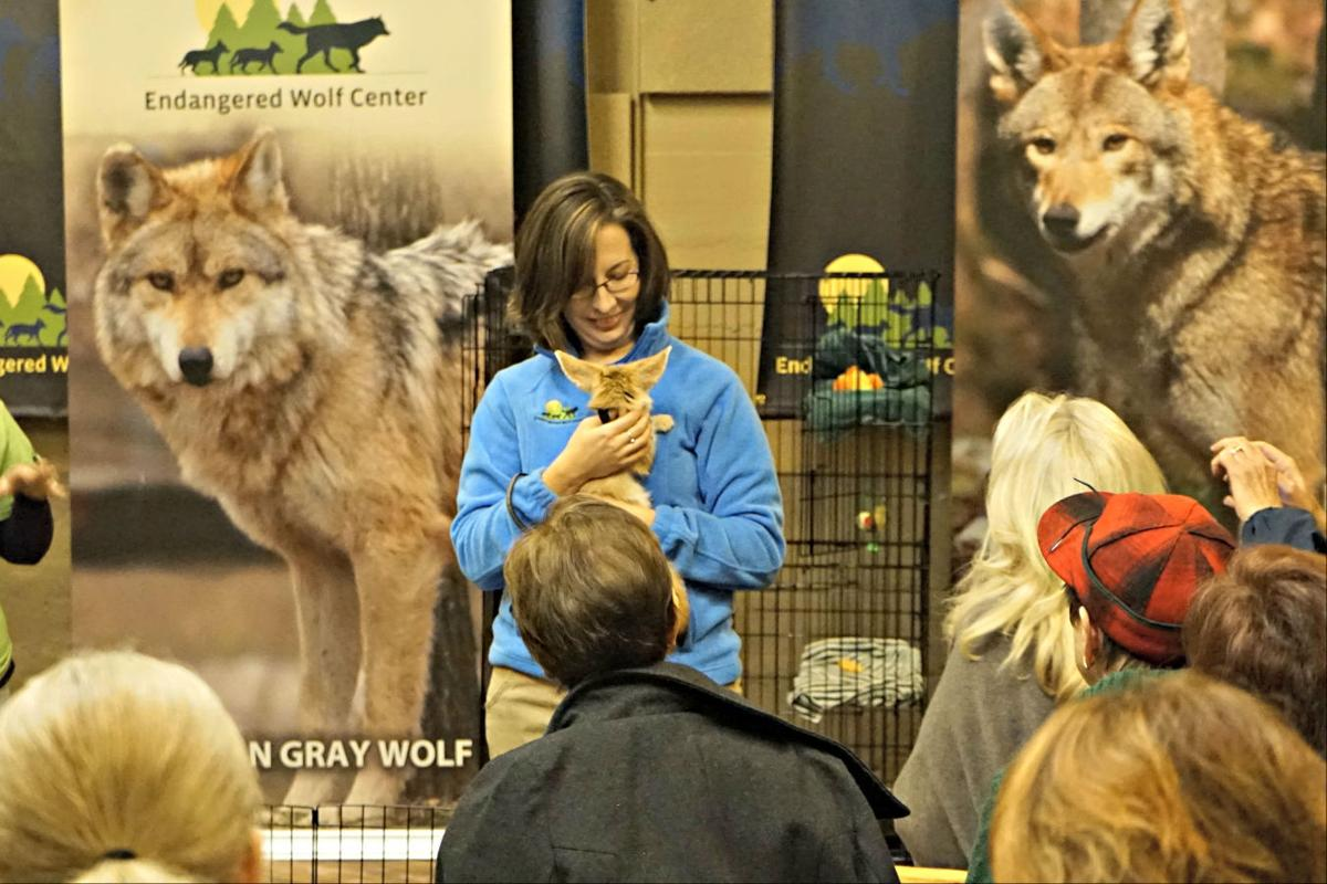 The Endangered Wolf Center: St. Louis' Best-Kept Secret?