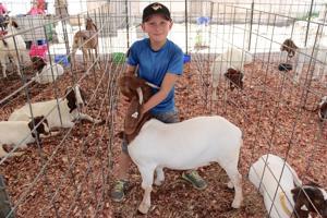 St. Francois County Fair - Thursday