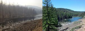 Naneum ponds before and after