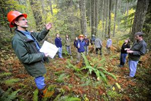 Benton timber sale draws protest