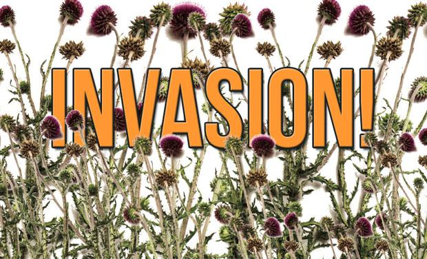 Invasion of the weeds