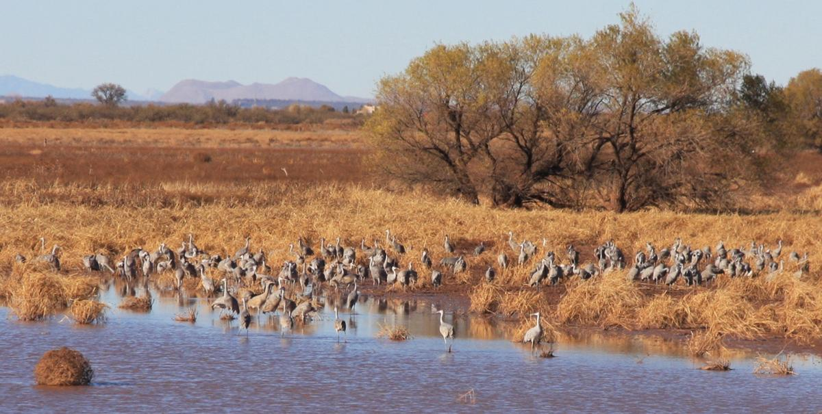 Crane viewing inconsistent news for Az game and fish draw results 2017