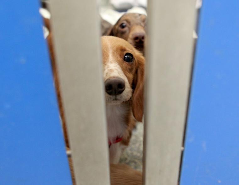 Mspca Adoptable Dogs