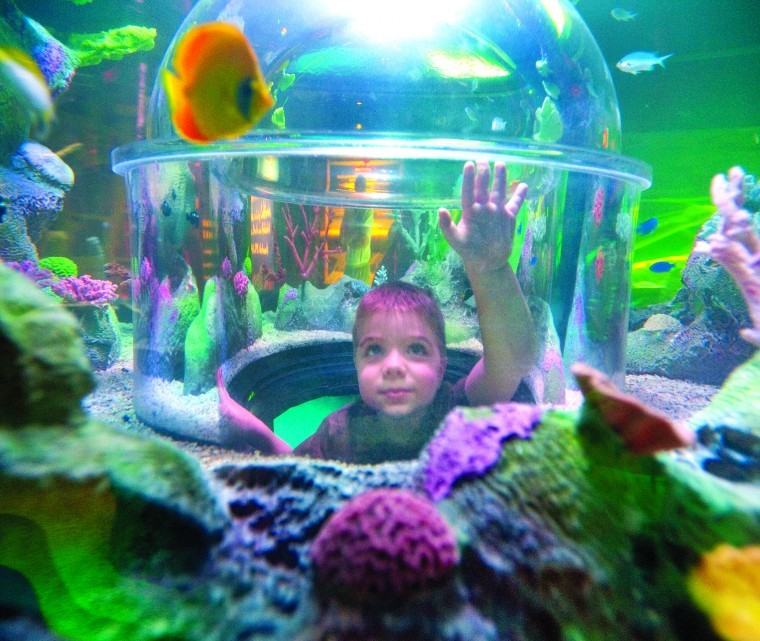Plenty for the kids to see do during spring break in the Arizona mills mall aquarium