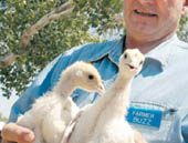 AJ's ends poultry deal with Young's Farms