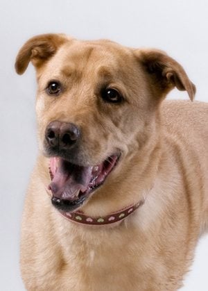 Pet of the Week: Tanna