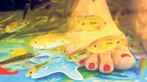 Hearing on feet-nibbling fish Monday