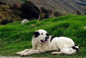 Venezuela Dogs of Chavez
