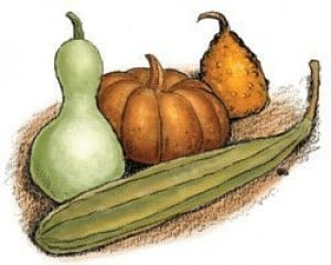 Plant of the week: Gourd