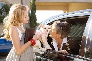 For a silly dog movie, 'Beverly Hills Chihuahua' has legs